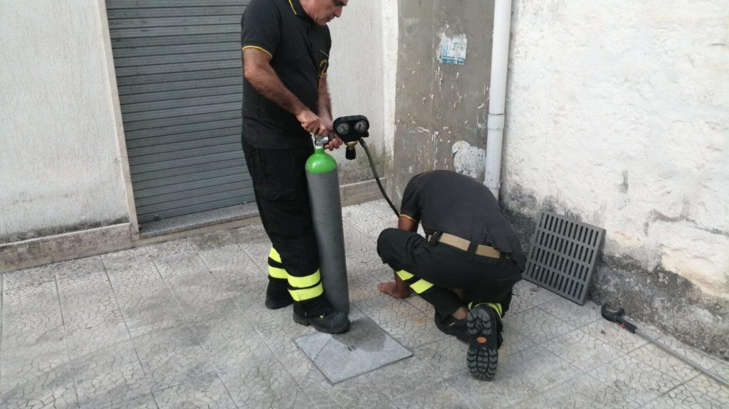 Gattino salvato a Cisternino