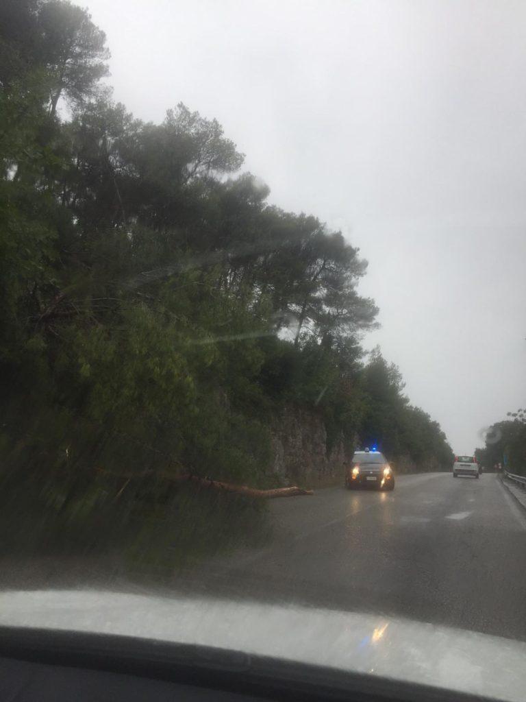 Cisternino albero caduto nella Gravina